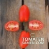 Datterino Tomate 3
