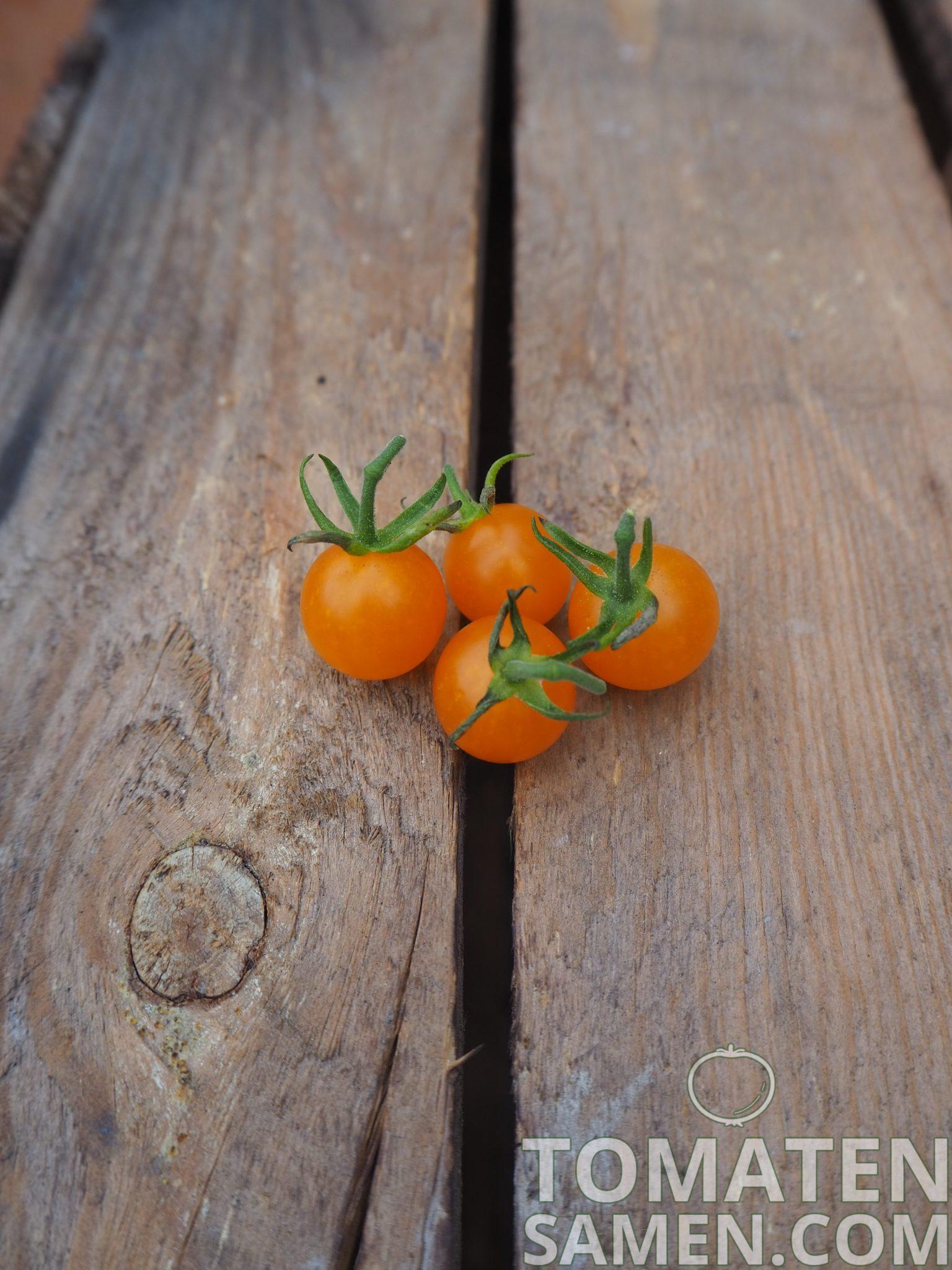 Wildtomate orange 25 Samen