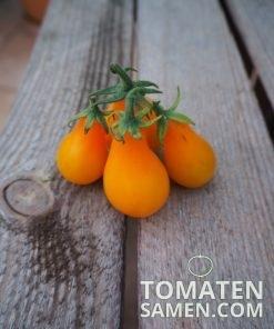 1951_2_Orange_Pear