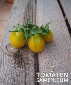1952_2_Green_Pear