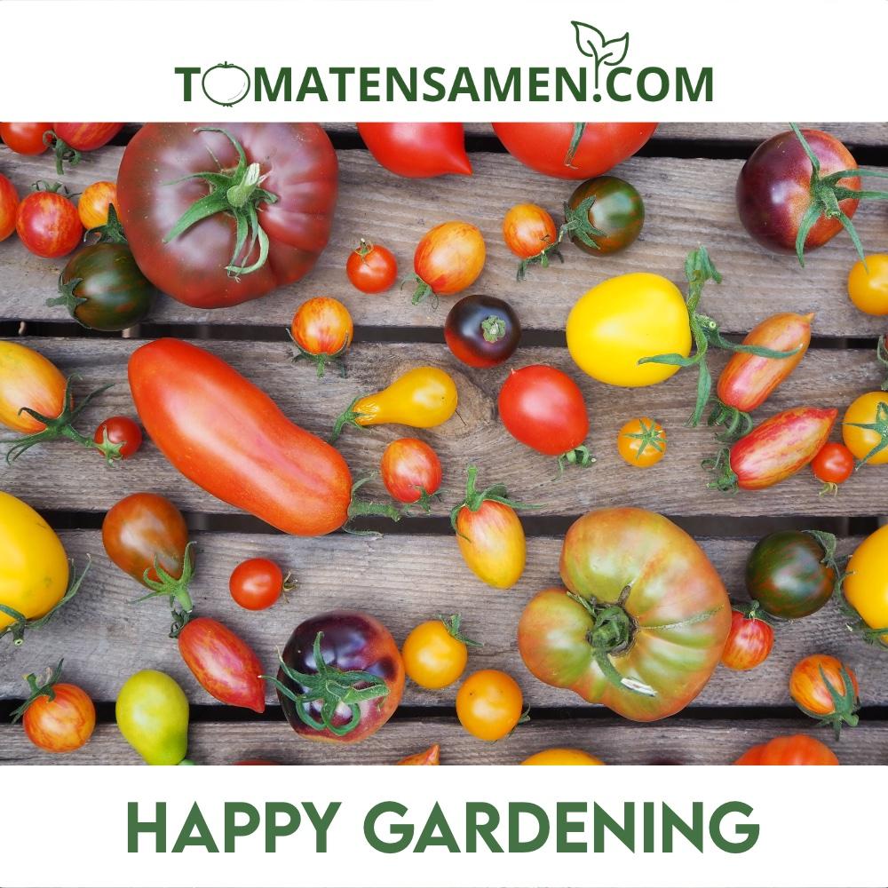 AIMADO Samenhaus-Rarit/ät 100 St/ück Veredelte runde Tomaten Samen F1 Bio Saatgut Gem/üse,Bunte Tomaten Mix vollfruchtigem Geschmack f/ür Ihr K/üche